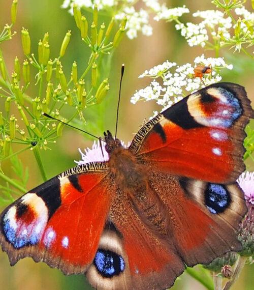 papillon-nature-mission